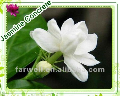 Farwell flower extracted Jasmine concrete