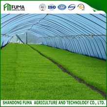 FM Low Cost Agricultural Single-span Tunnel Greenhouse
