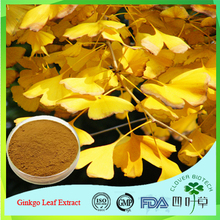 Bulk supply Ginkgo Biloba Extract(Flavone Glycosides 24%, Total Terpene Lactones 6%)