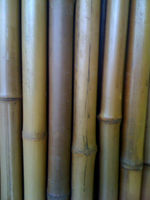 BAMBOO FENCING POLES