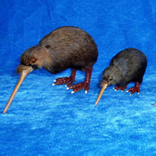 wholesale fur toy kiwi bird mini feather birds from new zealand