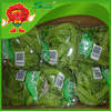 Fresh Vegetables and Fruits Supplier in China Top Grade Snow Peas