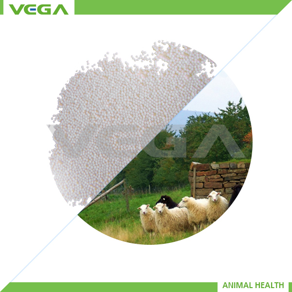 pig feed product grow intestinal villis coated sodium butyrate 30% animal health feed