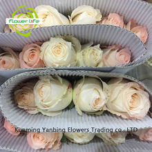 Wedding Flower High Quality Cheap Red Rose White Rabbit With 60-80cm Long Stem Different Types Of Red Rose White Rabbit For Chri