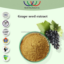 NATURAL free sample grape seed powder extract,anti-oxidant for cosmetic raw material 95%proanthocyanidins vitis vinifera extract
