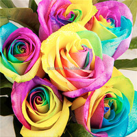 Best Price 20pcs Colorful Rainbow Rose Valentine Lover Flower Seeds High Quality