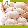 New design garlic product with high quality