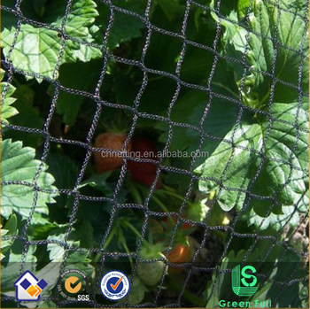 Black Color Anti Heavy Duty Bird Netting Superior Mesh Cover for Pond Plants and Garden 20x100m 20x20mm mesh size 30gsm