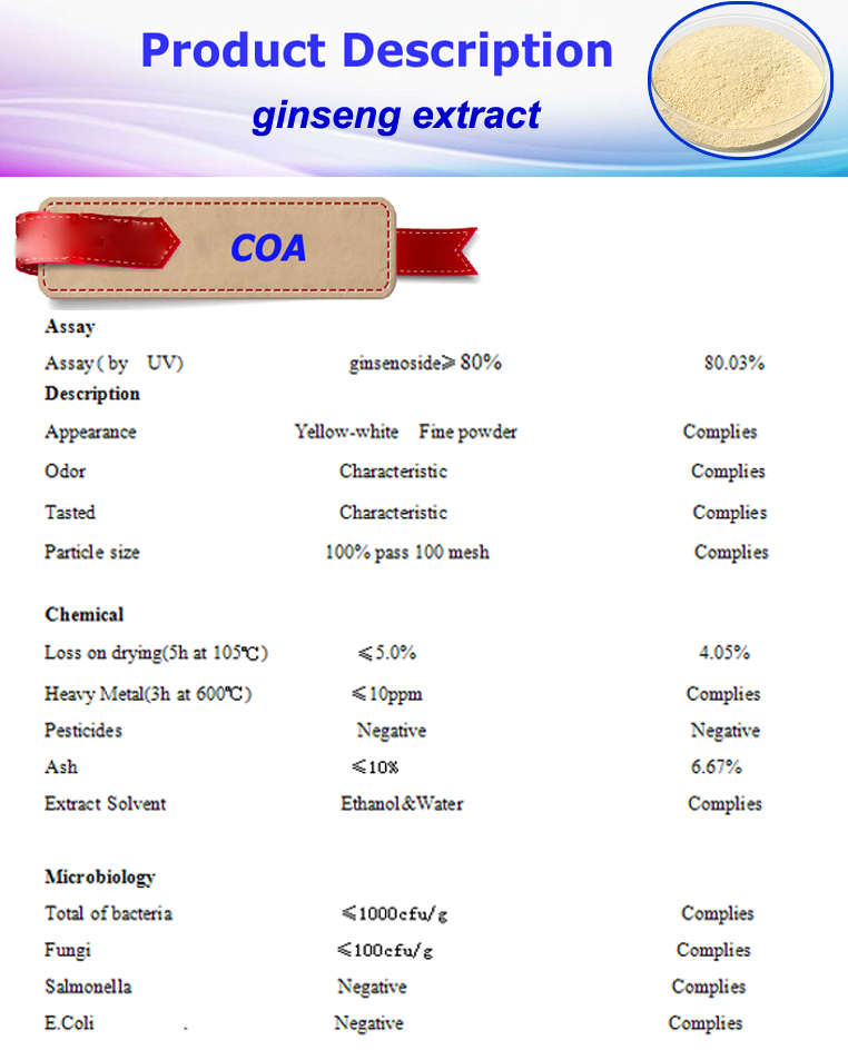 High Quality panax ginseng extract powder