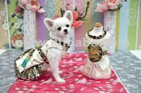 Best design dog clothes-Classy Court Dress for Classy Doggies