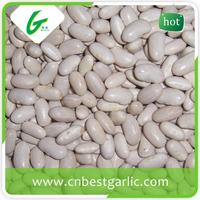 Long size wkb large dried white kidney bean