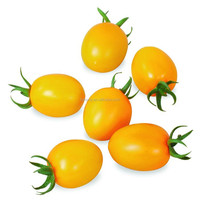 Yellow high quality cheap price cherry tomato seeds from China