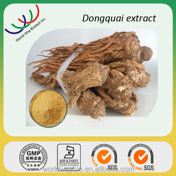 Best regulating menstruation herbal medicine angelica sinensis root extract 1% ligustilides powder,chinese angelica root extract