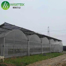 Cheap agriculture tunnel plastic multi-span rain shelter greenhouse
