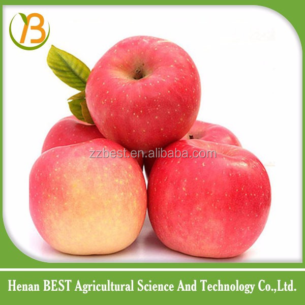 sweet white apple fruit with excellent quality