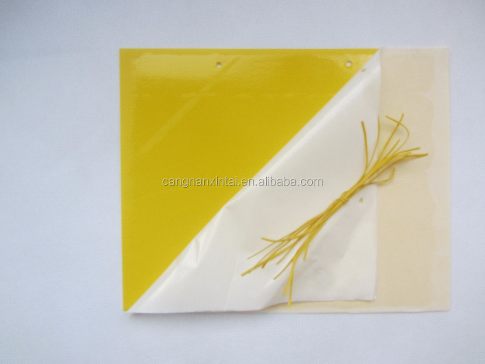 China yellow pp insect killer polypropylene sheet roll/Piece for insect sticky/glue trap