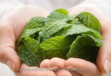 FRESH DEMENTHOLISED MINT OIL WITH GCMS