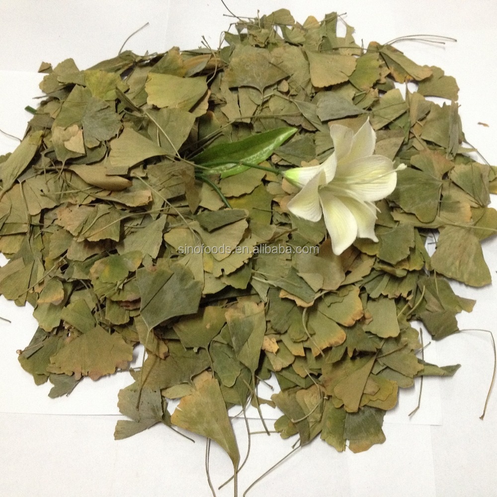 Ginkgo Leaf Dried gingko biloba leaf/Anti Cancer And Anti-fading Ginkgo Biloba