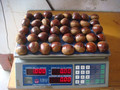 New coming fresh Dandong chestnuts for sale