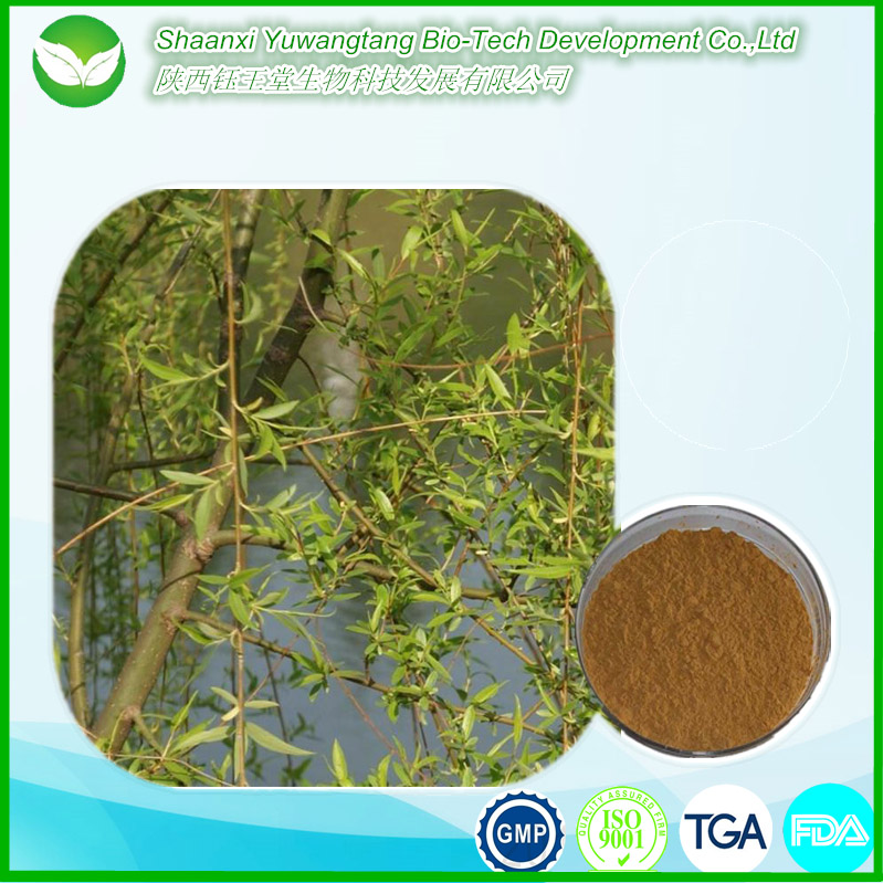 Anti-rheumatism Chinese herb salicin White Willow Bark Extract/White Willow Extract