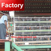 Factory price farmland poultry cage for layer chicken for wholesales