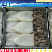 New arrival China export frozen squid T+T wholesale