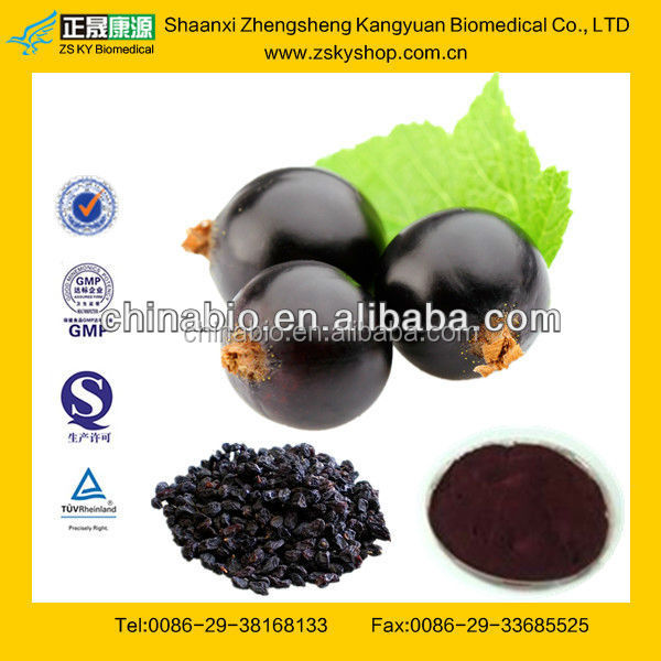 GMP Manufacturer Supply High Quality Black Currant Extract