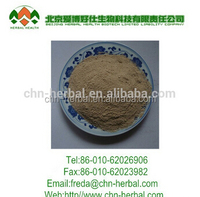 Natural herb extract Chinese angelica (Dong Quai) Extract