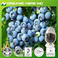 Natural anthocyanins bilberry extract | Bilberry Fruit Extract