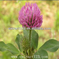 natural Red Clover Extract/Alfalfa Extract/Medicago Extract