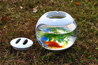 fashion glass bullet aquarium fish tank guppy fish, betta fish,toy fish aquarium fish tank