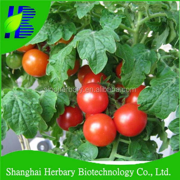 Hot sale mini vegetable seeds, Hybrid F1 FL potted red little tomato seeds for sale