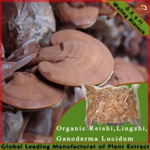 Direct Sell High Quality Reishi Mushroom