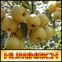 Huminrich Shenyang Humus 100% Water Soluble Fertilizer