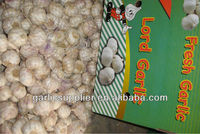 2012 crop garlic