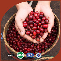 Factory price coffee bean, bulk green coffee beans robusta