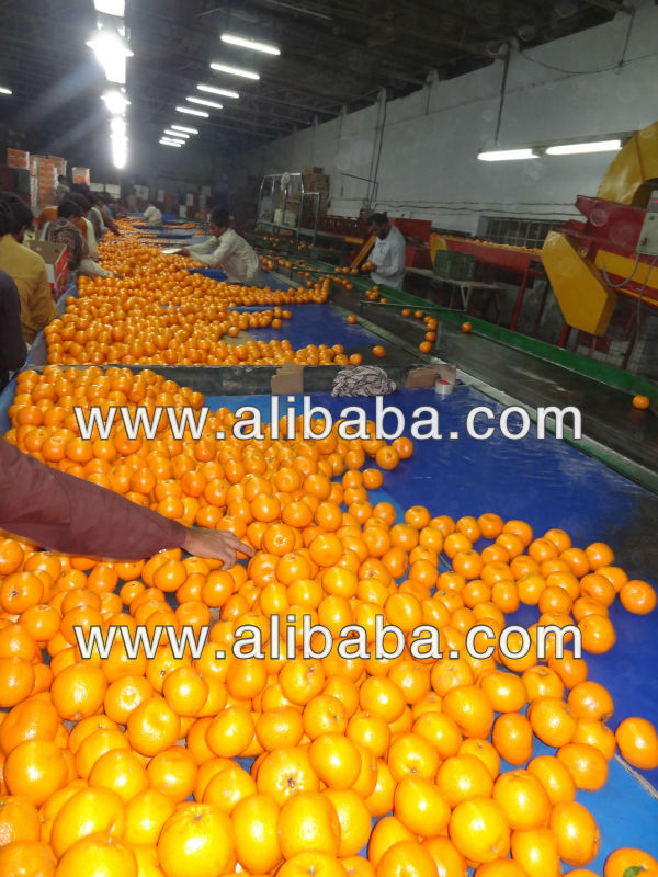 8, 10, 13kg carton box packing of Navel Orange/Kinnow/Mandarine