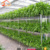 Economical agricultural greenhouses aquaponics growing system