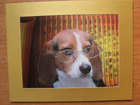 2014 New arrival High quality Fashion hot sale 3d lenticular picture of lovely dog with papaer frame
