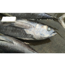 Good price frozen seafood bulk yellowfin tuna