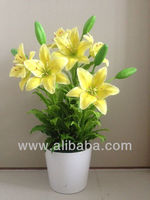 Clay Yellow Lilly