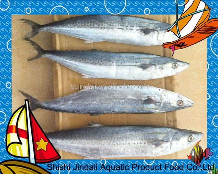 Frozen spanish mackerel, frozen mackerel price, frozen fish