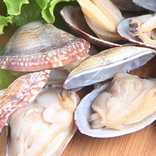 frozen shell whole baby clam for bulk sale