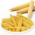 Best canned baby corn brand with competitive price