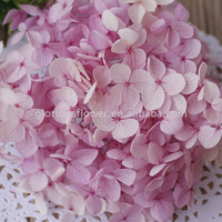 Factory Price Export Fresh Cut Flowers