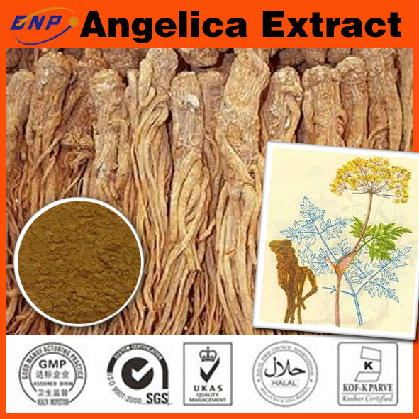 chinese medicine angelicae ,angelica extract from angelica root