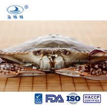 frozen blue swimming crab meat with good price portunus trituberculatus