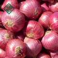 market price for 5-7cm size red onion