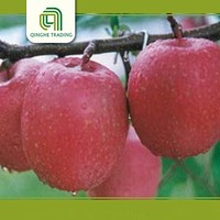 china import qinguan apples fresh produce with low price