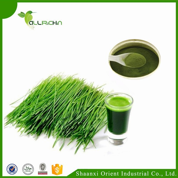 Food & Beverage Usage Organic Wheat Grass Powder